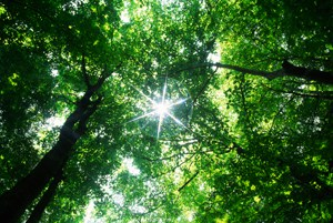 sunlight star on top of forest canopy_